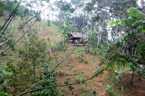 Pondok ditengah ladang menuju Baduy Dalam