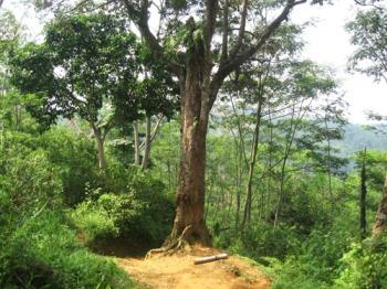 Pohon Duren sebagai check point